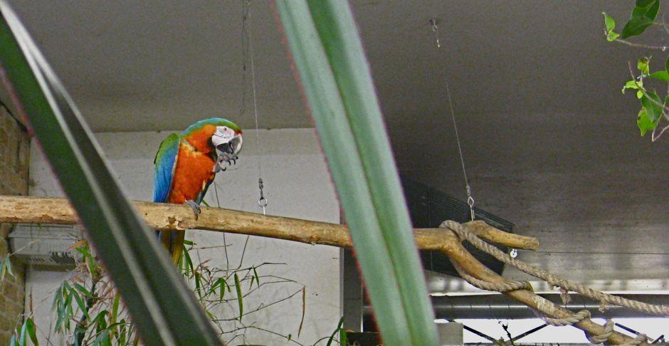 Papageien Zum Frühstück Was Soll Das Prenzlauer Berg Nachrichten