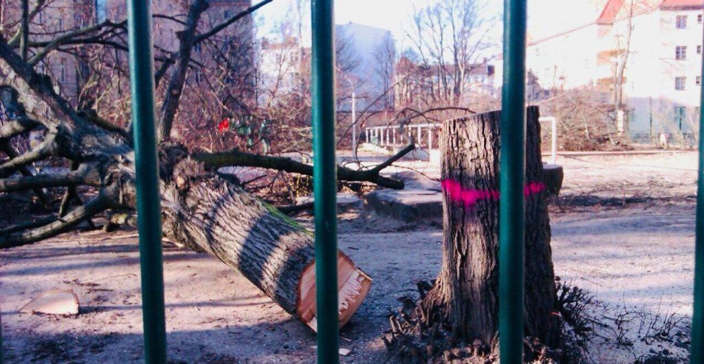 Auch auf dem Schulhof der Carl-Humann-Grundschule müssen Bäume dran glauben (Foto: Ronald Lohse)