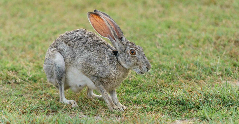 Ostern Hase Prenzlauer Berg