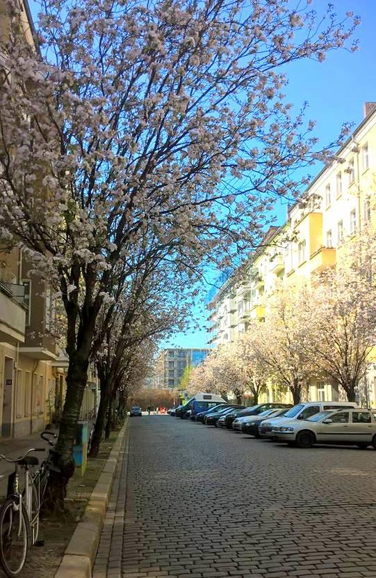 Frühling Prenzlauer Berg Newsletter