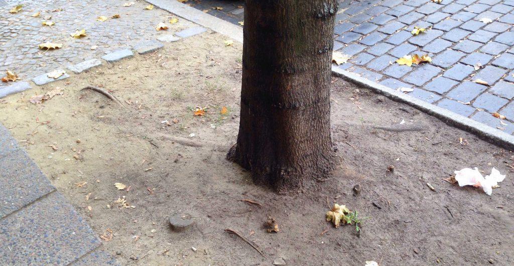 Straßenbaum Baumscheibe