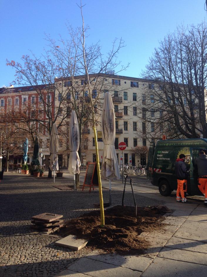 Neuer Ginko vor dem Restaurant Pasternak (Foto: Julia Schmitz)