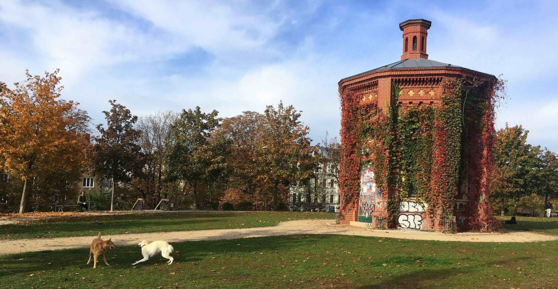 Hunde Wasserturm